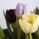 Bare blomster…