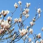 Bøgeblade, blomster og bløde ballerinaer