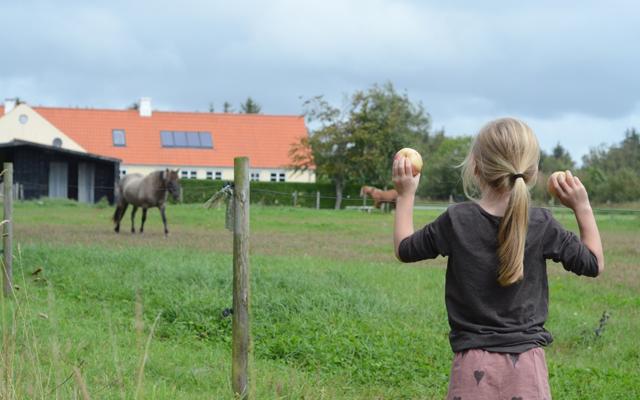 Hest og æbler