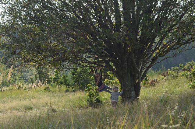 klatretræ