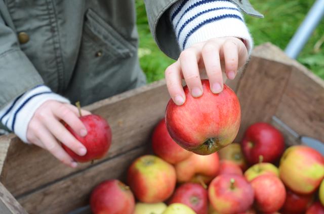 æbler-æbler-æbler