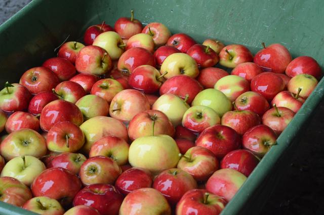 æblevask